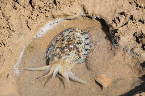 Safaga Palace Resort : поймали в море каракатицу