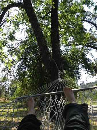 Sivananda Ashram Yoga Farm: On a hammock