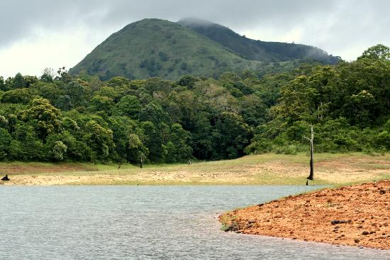 Periyar Meadows Leisure Hotel: Thekkady Forest