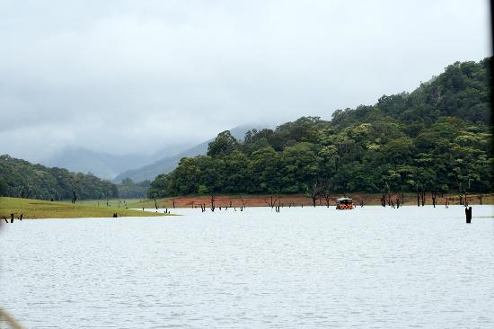 ‪‪Periyar Meadows Leisure Hotel‬: Thekkady Forest‬