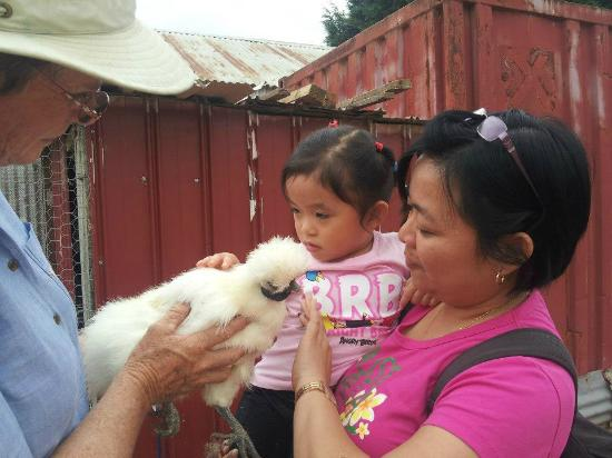 Barcoos Farmstays Bathurst: Petting a Chinese Silky
