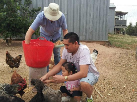 Barcoos Farmstays Bathurst: Feeding the Chooks