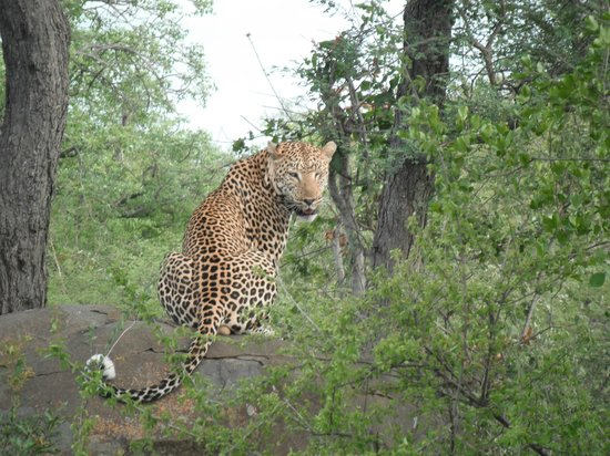 Pondoro Game Lodge: Leopard