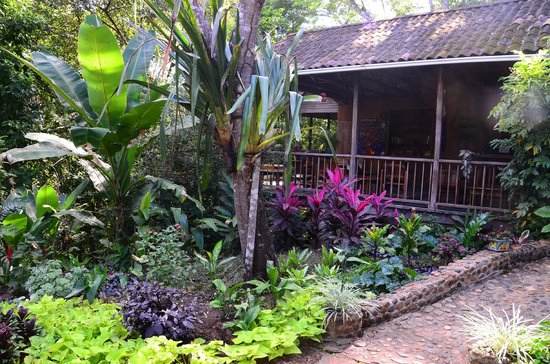 duPlooy's Jungle Lodge : The outdoor bar and dining is a great place to see birds, and meet and greet other guests.
