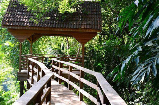 duPlooy's Jungle Lodge : Take an elevated walk in the jungle, wow!