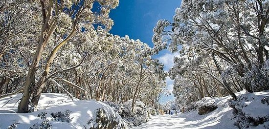 Mount Baw Baw, Australien: The village entrance at Mt Baw Baw during winter