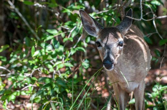 National Key Deer Refuge : Hi!