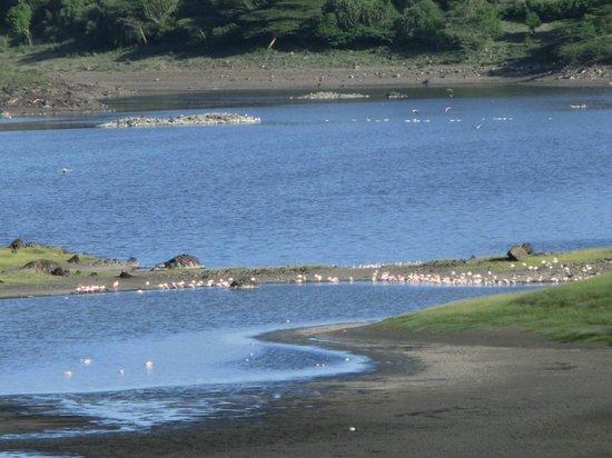 Hatari Lodge: Momella Lakes