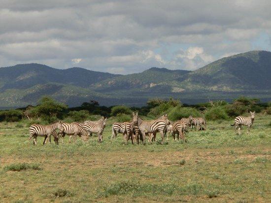 Shu'mata Camp: Amboseli