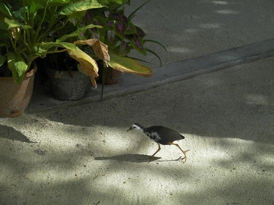 Ranveli Village: Birdy