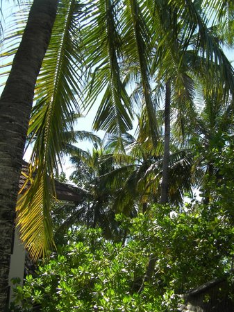 Ranveli Village: Palm Trees