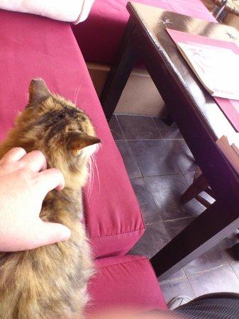 Riad Boussa: 猫は2匹。この猫は、人見知りです。