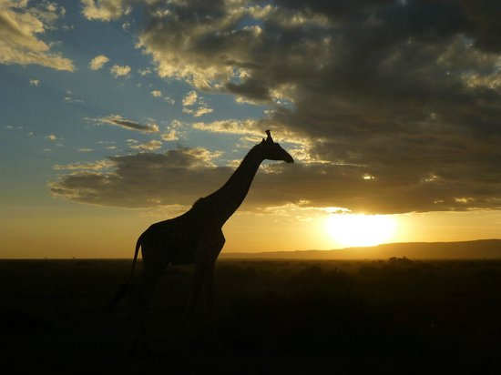 Kilima Camp : Sunset in the Mara