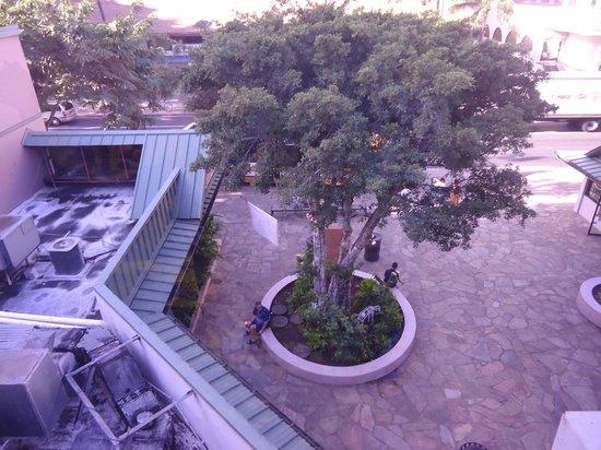 Kuhio Banyan Club : 窓から