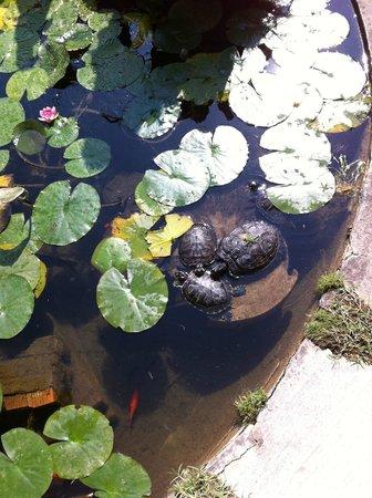 Belmond Hotel Cipriani: Fish pond