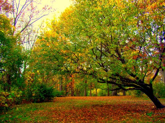 Fairmount Park: A view from the 1st tee- Sedgley Woods Disc Golf Course