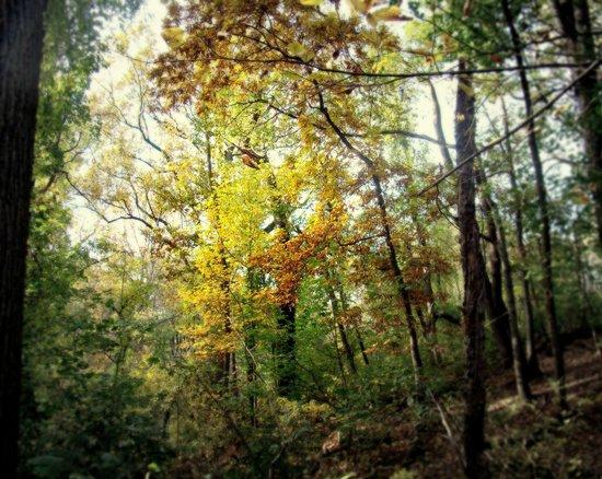 Fairmount Park: Fairmont Park- Fall
