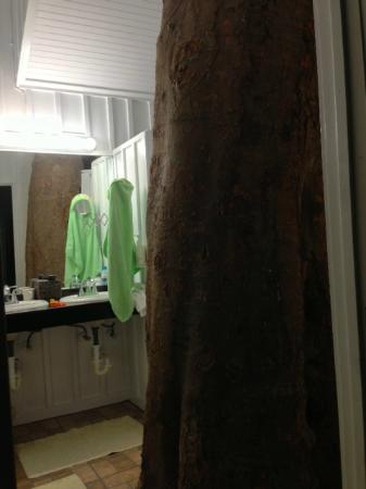 Old Town Manor: Lime Tree in bathroom