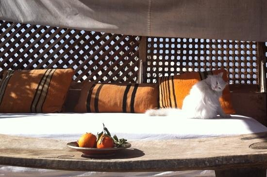 Riad 144 Marrakech: chilling roof with charming cat visitor