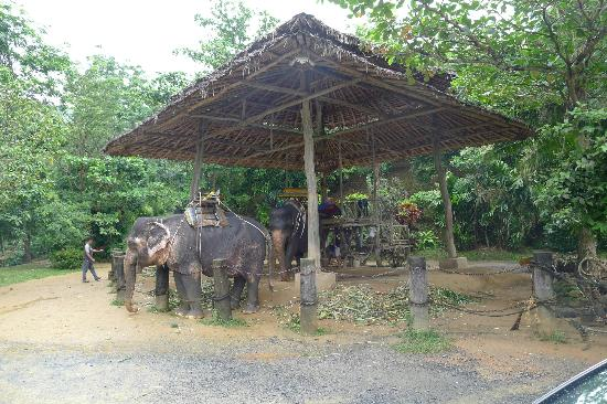 Kok Chang Safari Elephant Trekking : Elephants