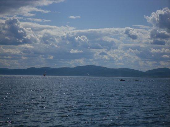 Excursions en Mer Baie de Tadoussac Day Tours : balena a tadoussac