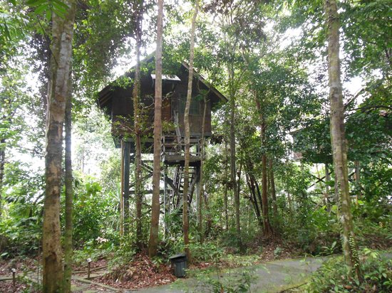 Permai Rainforest Resort: Tree House No.3