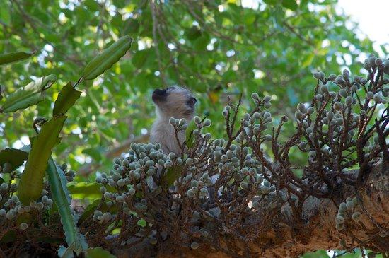 Naledi Bushcamp and Enkoveni Camp: Monkey near lodge
