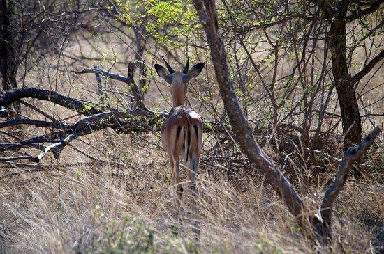 Naledi Bushcamp and Enkoveni Camp: Game drive