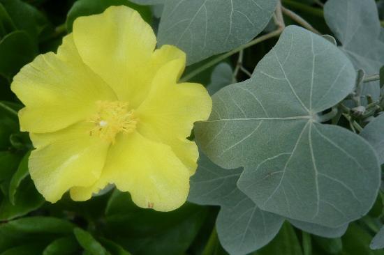 Amy B.H. Greenwell Ethnobotanical Garden : Flower