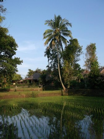 Ananda Cottages: Le cadre hotelier
