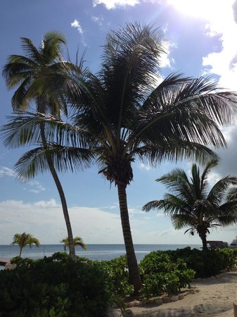 Coco Beach Resort: who doesn't love palm trees