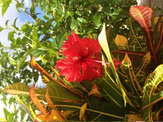Coco Beach Resort : I loved these flowers