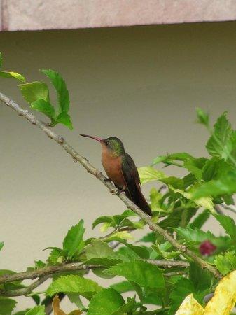 Coco Beach Resort : humming bird