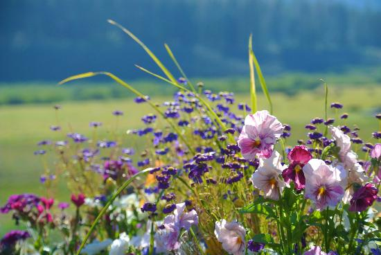 Devil's Thumb Ranch Resort & Spa: Wild flowers