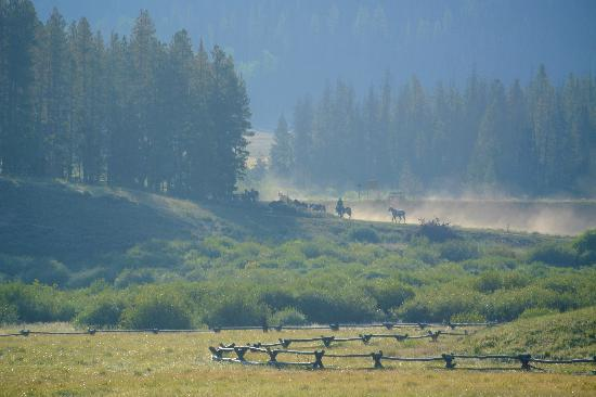 Devil's Thumb Ranch Resort & Spa: Horses being herded in the morning mist