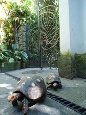 Casa Beleza: Turtles in the garden of the B&B