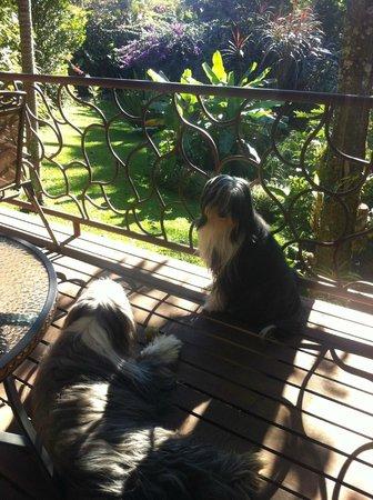 Tacacori EcoLodge: Les chiens du Tacacori (Ulysse) 