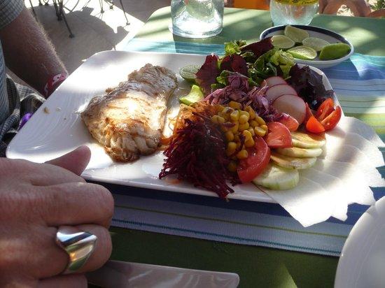 El Gusto! Restaurant : snapper and salad.