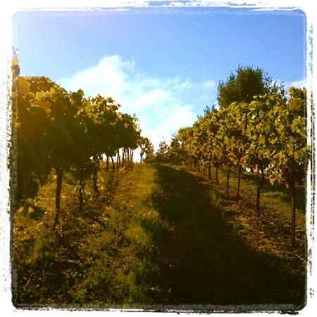 Demarest Hill Winery: Our Beautiful Vines