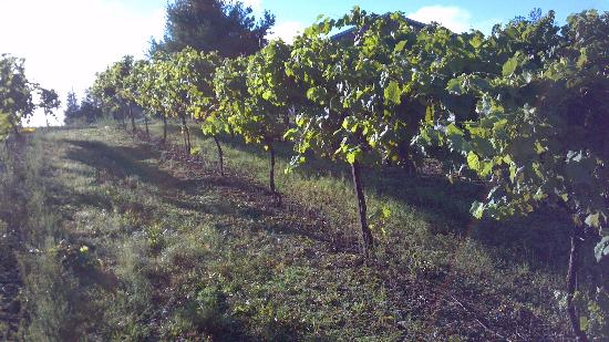 Demarest Hill Winery: Summer Morning Vineyard