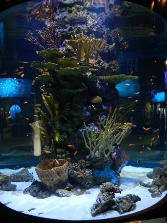 Beluga Picture Of Vancouver Aquarium Vancouver Tripadvisor