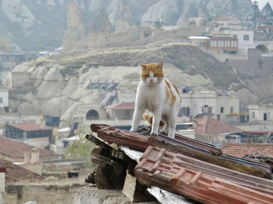 Caravanserai Cave Hotel: Cat on the roof