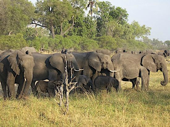Chitabe Camp: Lots of elephants