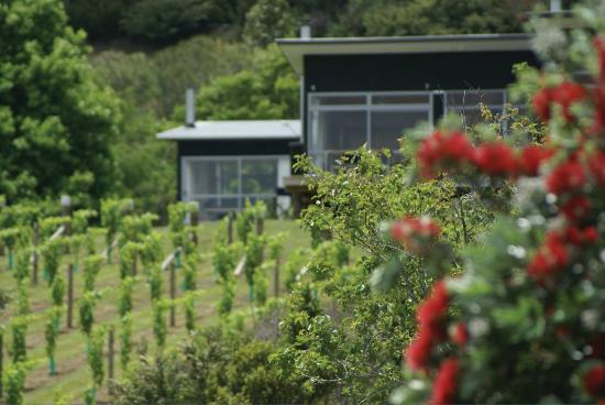 Riverside Matakana: Baches set among the vines