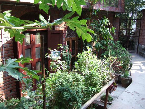 Ramana's Organic Cafe: Doors open 11:00-15:30  Tues-Sun