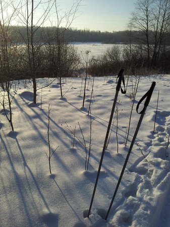 Romanov Les: Лыжи на берегу Волги