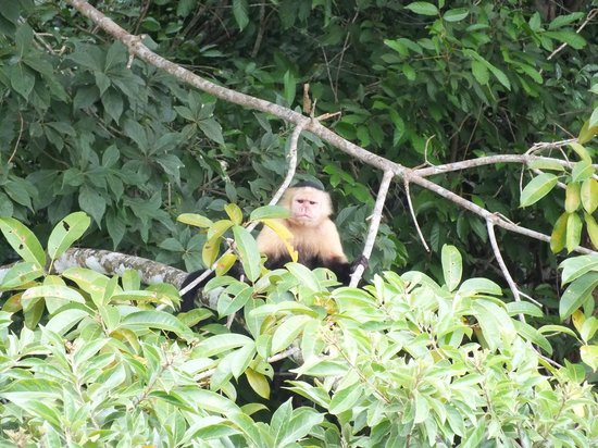 Monkey Island : The one monkey