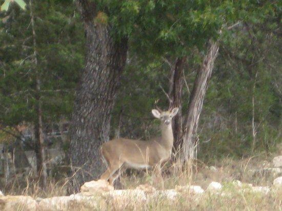 Cypress Creek Cottages: Discovering deer 
