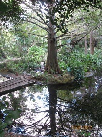 Deerfield Beach Arboretum: The bubbling brook
