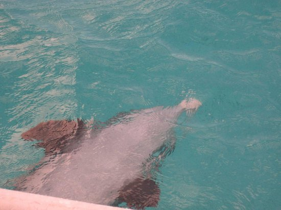 The Meridian Club Turks & Caicos: Jo Jo loves to swim out from beneath the boat on his back!